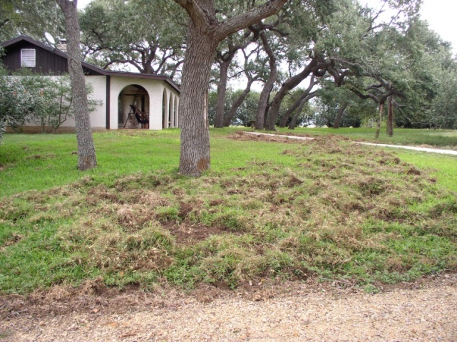 wild-hog-damage-lakewood-ranch