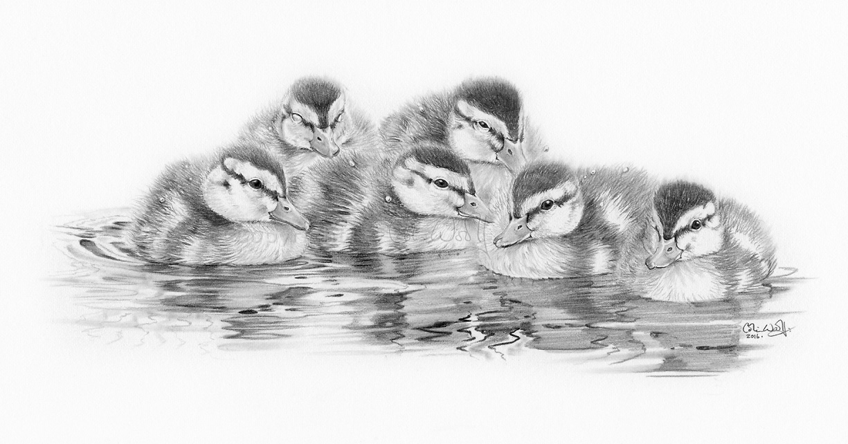 Ducklings-ws
