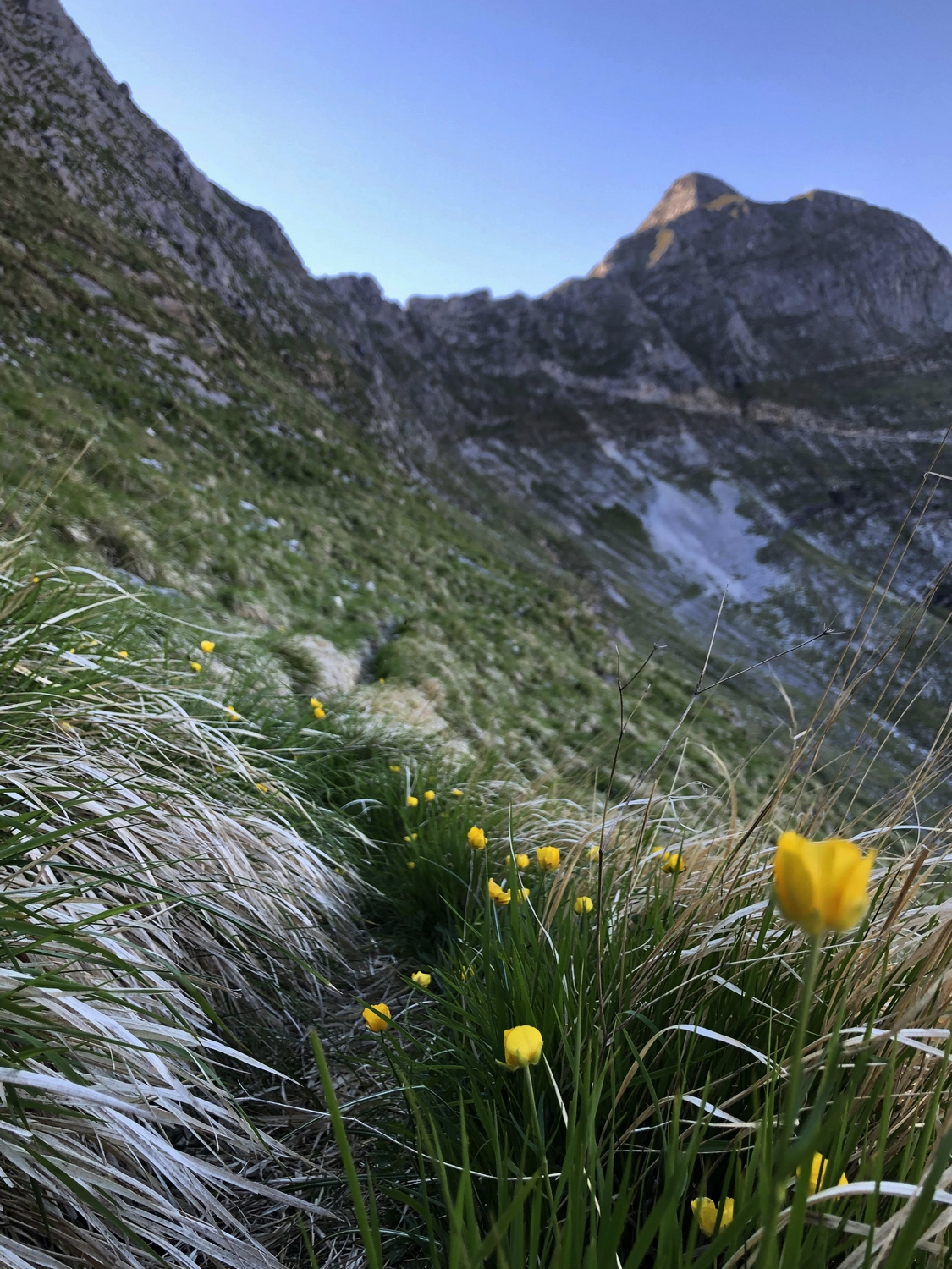 Paleo Grass Apuan Alps Monte Sella