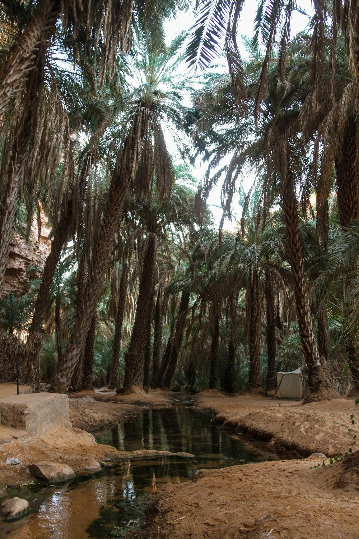 Terjit-Oasis-Atar-Mauritania-Adrar-Water-Stream