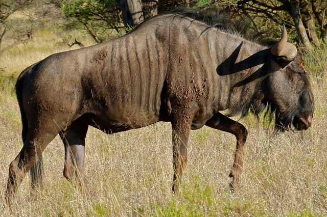 Animals of the Kruger Park  Wildmoz  Magazine