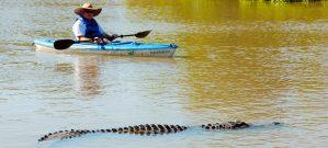 Kayaker gets a closer look at an Alligator