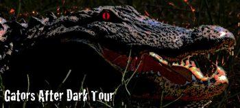 Gators After Dark Boat Tours