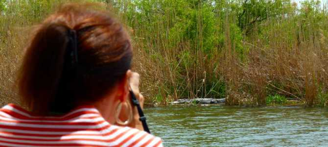 Delta Wildlife Boat Eco-Tour