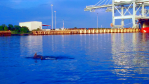 Dolphins play in the port