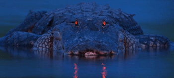 Gators After Dark Charter