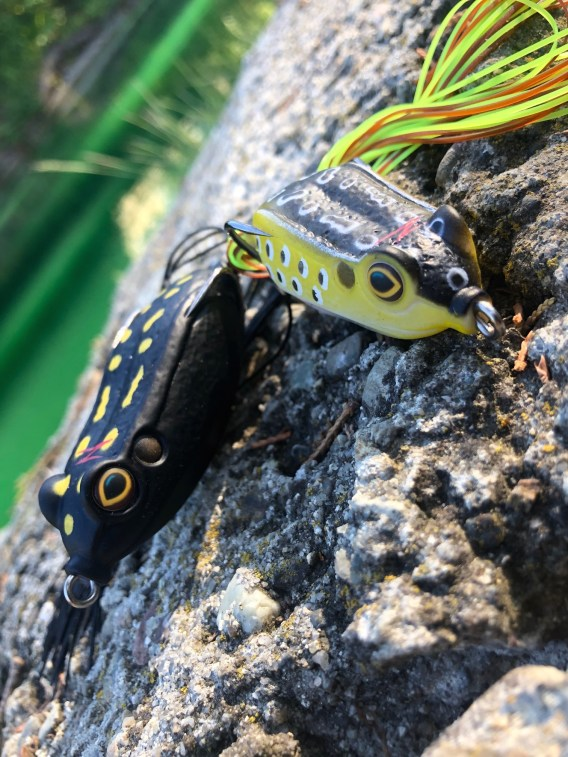 Zman top water frogs like these are excellent lures for active bass.