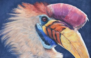 """Knobbed Hornbill"" 30 x 18cm Coloured pencils on Strathmore Brisol Vellum. Reference Photo used with permission from Jan Willemsen. Art by Wild Portrait Artist. Available for sale."