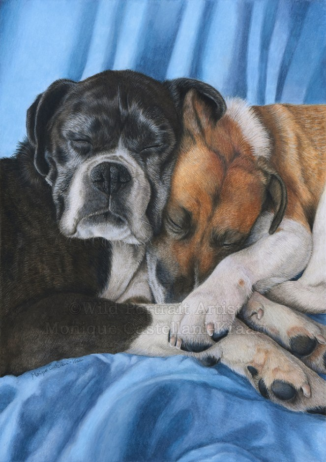 """Companionship"" - 30 x 42cm coloured pencil pet portrait commission on fabriano artistico hot pressed 140lb watercolour paper."