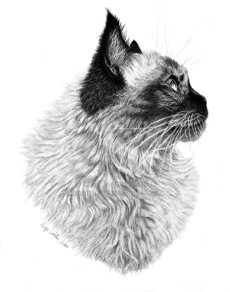 """""""Suki"""" - 11 x 14 inches, Staedtler Mars Lumograph pencils on Strathmore Bristol Vellum. Art by Wild Portrait Artist."""