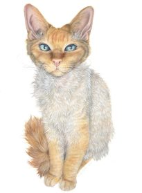 """""""The Woolly Wonder"""" 29.7 x 42cm coloured pencil commission on Fabriano Artistico Hot Pressed 140lb Watercolor Paper. Art by Wild Portrait Artist. SOLD."""
