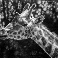 """Giraffe Portrait"" – 21 x 13cm, original graphite drawing on Hot Pressed watercolor paper. Art by Wild Portrait artist. SOLD."