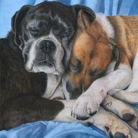 """Companionship"" - 30 x 42cm coloured pencil pet portrait commission on fabriano artistico hot pressed 140lb watercolour paper. Art by Wild Portrait Artist. SOLD."