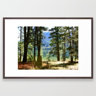 summertime-woods-framed-prints