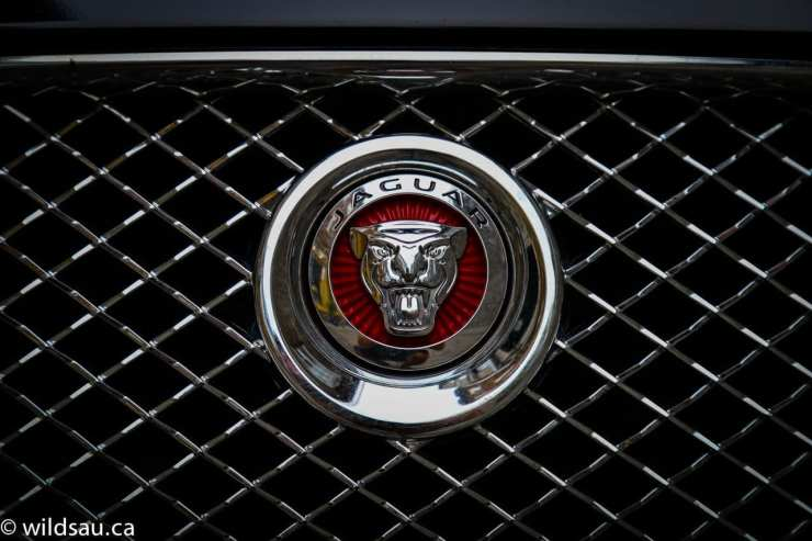 Jaguar grille badge