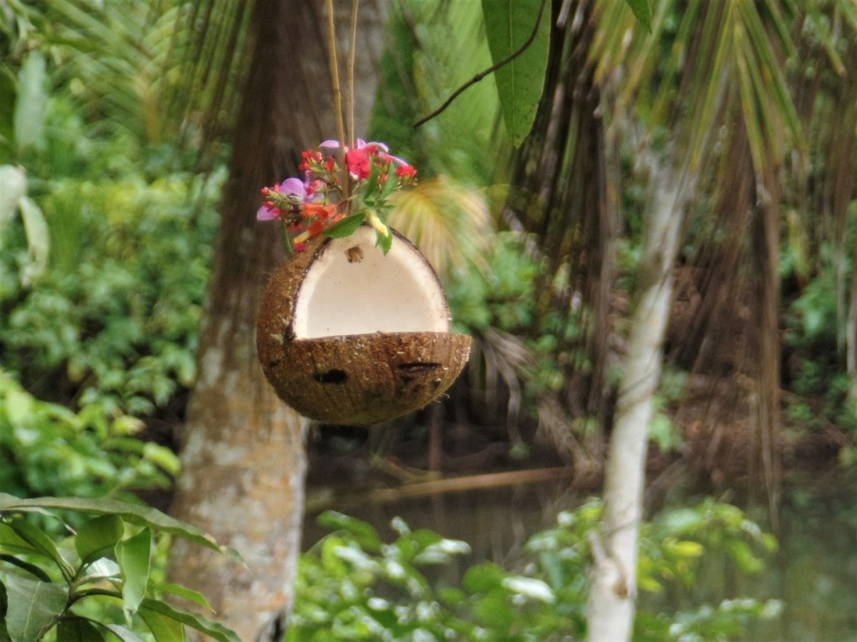 How to Make: Coconut Bird Feeders