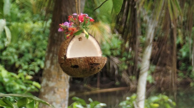coconut bird feeders