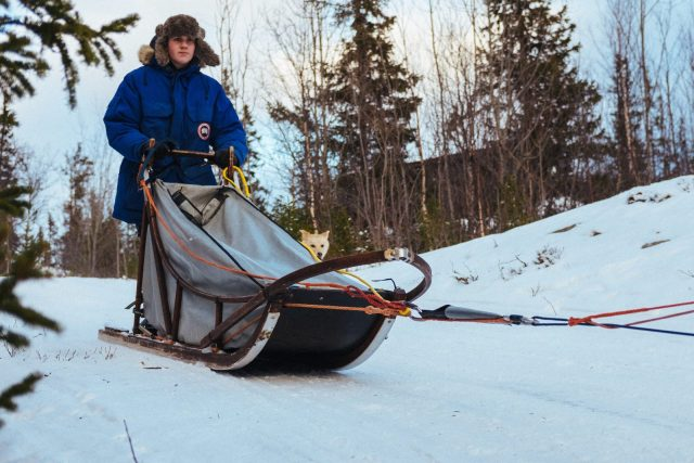 Drive Solo with your own team of sled dogs