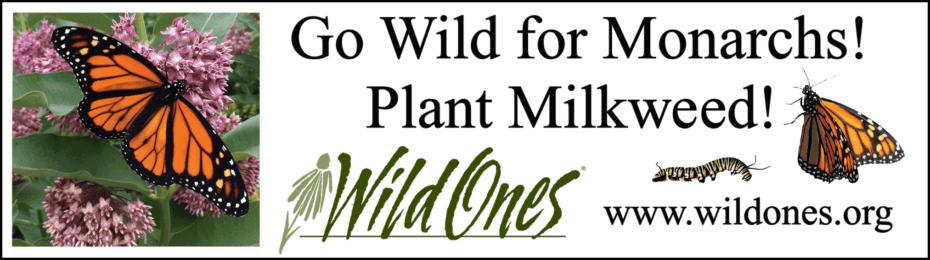 Wild for Monarchs Bumper Sticker