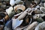 Frosty shell