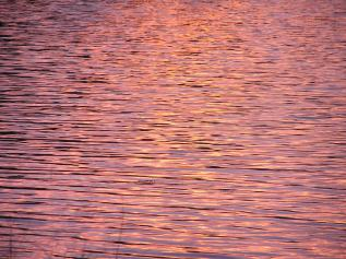 Pink water at sunset