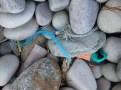 Raised beach pebbles with plastic