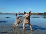 Daisy paddling