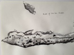 Mixture of pen and ink of fish skin. Above is a small pen and ink study of the lace on the knickers