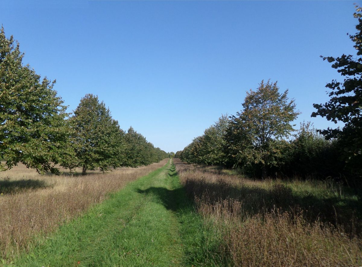 The Cambridgeshire Length 1.2: Meads towards Haslingfield and Coton