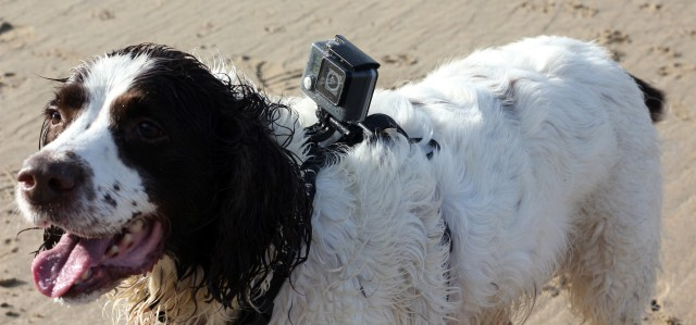 Kurgo GoPro Camera Mount Dog Harness Review