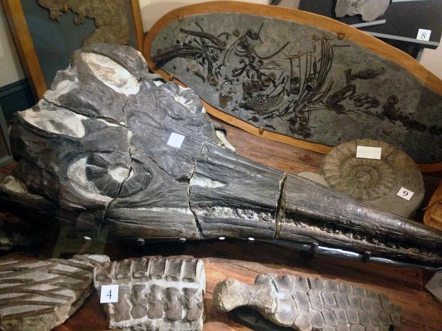 Lyme Regis Dinosaur