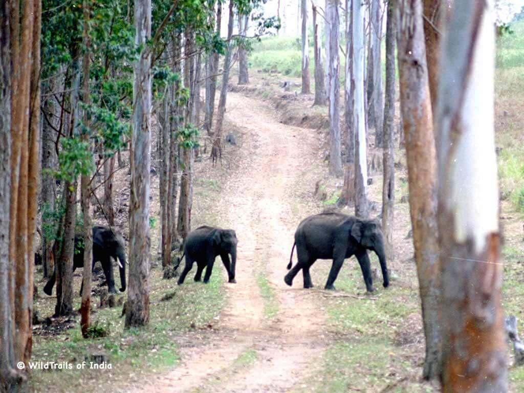 Lion Animal Wallpaper Complete List Of All Wildlife Sanctuaries Of Kerala India