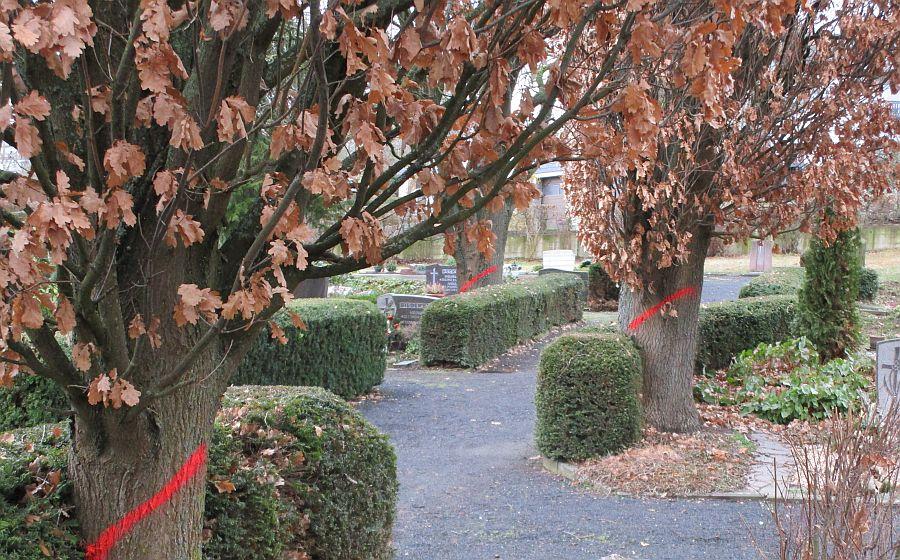Friedhof Wellen, Bäume_1.1