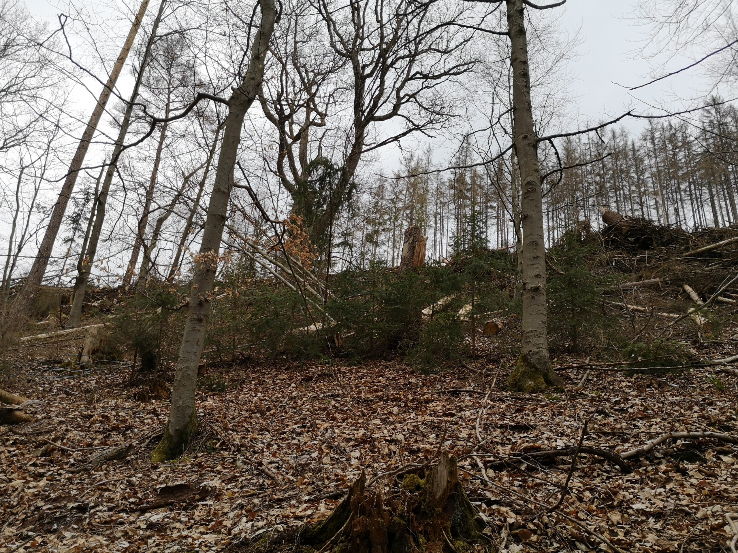 Wald in Not