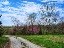 just another redbud panorama