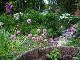 chives with clematis