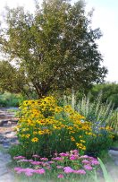 crabapple tree and rudbekia