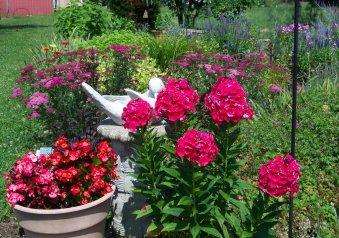 featuring begonias, phlox and yarrow