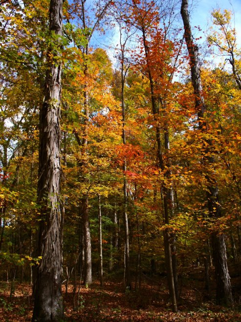 october woodland, southern indiana