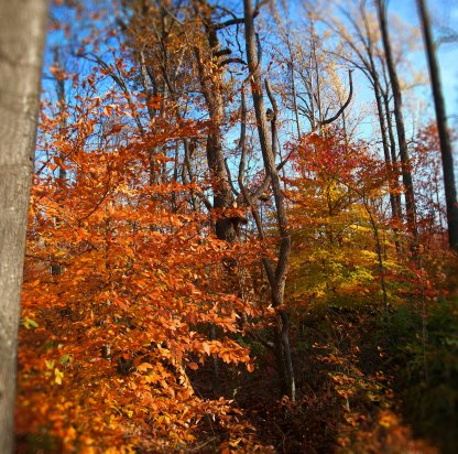 colorful october woods