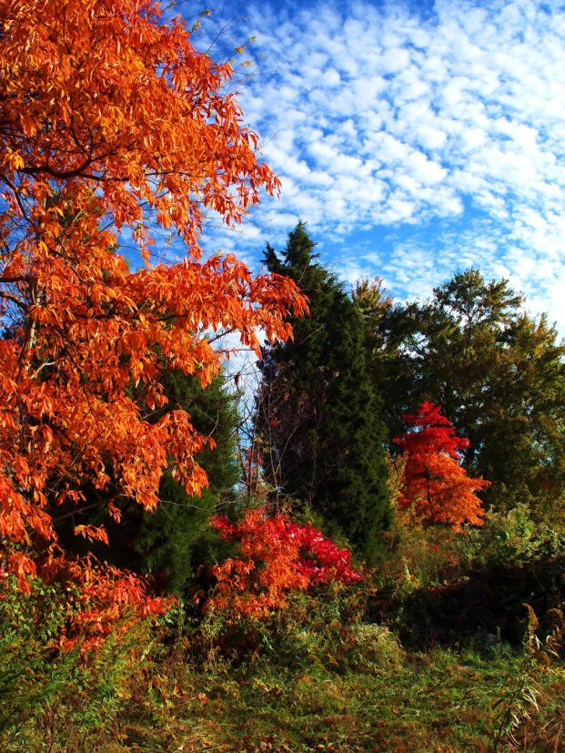 colorful october scenery of southern indiana