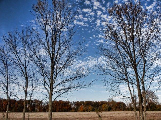 bare november trees, indiana