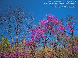 redbuds with caption