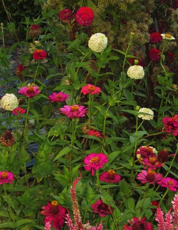 early-evening-in-the-garden3