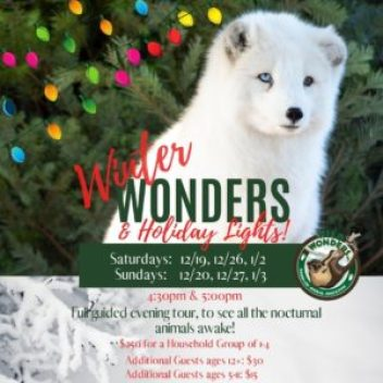 Winter Wonders and Holiday Lights