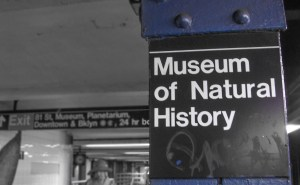 First stop: Museum of Natural History. Confession: we got lost.