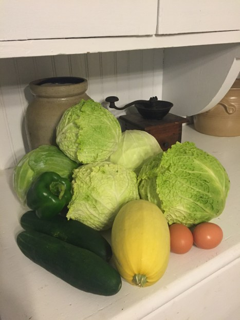 Harvested about 12 cabbages this week! Perfect for soups this winter, stir fry dishes, kraut & coleslaw.