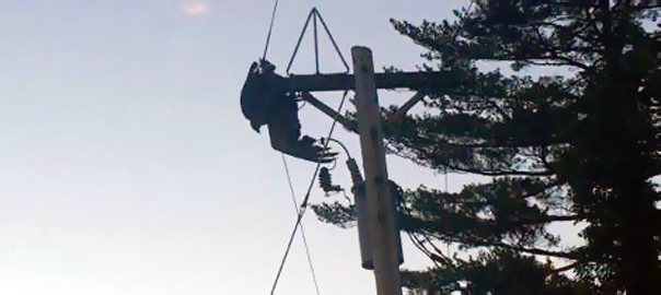 A Juvenile Bald Eagle was trapped in power lines