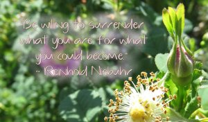 Be willing to surrender who you are for what you could become. Reinhold Niebuhr