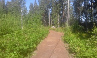 skogspromenader-tidigare-under-aret